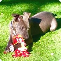 Adopt A Pet :: Denver - Murrieta, CA