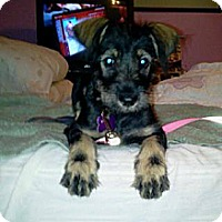 Adopt A Pet :: Adelina ~ Adoption Pending - Youngstown, OH