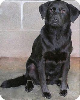 Labrador Retriever Mix Dog for adoption in Tahlequah, Oklahoma - Aretha