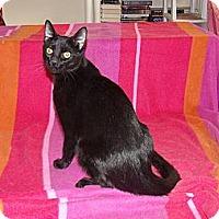 Adopt A Pet :: Finn - trill in voice - Scottsdale, AZ