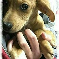 Adopt A Pet :: Wesley - Mandeville, LA
