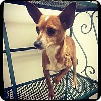 Adopt A Pet :: King - Grand Bay, AL