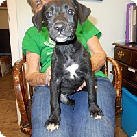 Adopt A Pet :: Oakie - Cottonport, LA