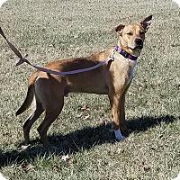 Adopt A Pet :: Charlie - Cameron, MO