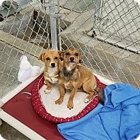 Adopt A Pet :: Mia & Milo - California City, CA