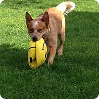 Adopt A Pet :: Wrangler - Garden City, NY
