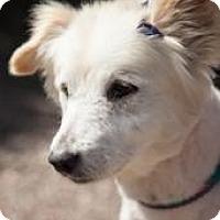 Adopt A Pet :: Maddy - Chandler, AZ