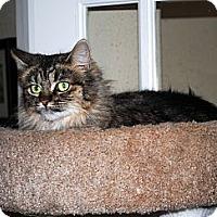 Adopt A Pet :: Rosie - Palmdale, CA