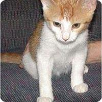 Adopt A Pet :: Sunshine - Kirkwood, DE