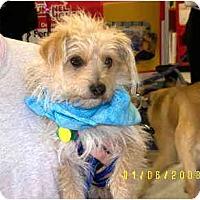 Adopt A Pet :: Wynn Dixie - Scottsdale, AZ