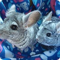 Adopt A Pet :: Baby & Squeakers - Virginia Beach, VA