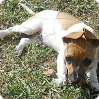 Adopt A Pet :: Twix - Oklahoma City, OK