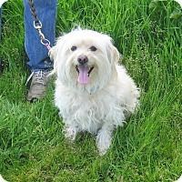 Adopt A Pet :: Bonnie - Tracy, CA