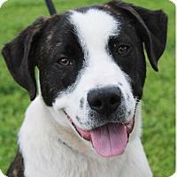 Adopt A Pet :: BUSTER - Red Bluff, CA