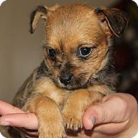 Adopt A Pet :: Ellen - Doylestown, PA