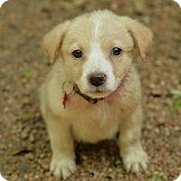 Adopt A Pet :: Howard - San Antonio, TX