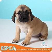 Adopt A Pet :: Cera - Enid, OK