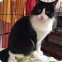 Adopt A Pet :: Rafiki - Oakland, CA