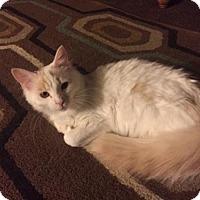 Adopt A Pet :: Jefferson - Marlborough, MA