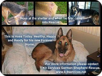 German Shepherd Dog Dog for adoption in Green Cove Springs, Florida - Hoss