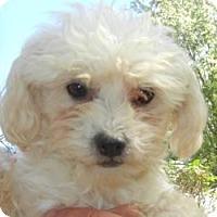 Adopt A Pet :: Hobbes ADO[TION PENDING!! - Antioch, IL
