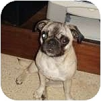 Adopt A Pet :: Pringle - Windermere, FL