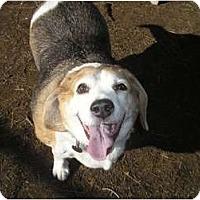 Adopt A Pet :: Wilson Edward - Phoenix, AZ