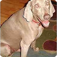 Adopt A Pet :: Chase  **ADOPTED** - Eustis, FL