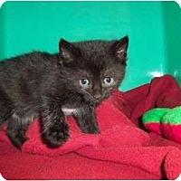 Adopt A Pet :: Paul - Secaucus, NJ