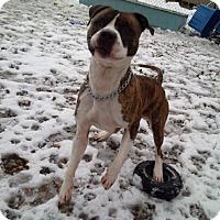 Adopt A Pet :: Phillip - Tinton Falls, NJ