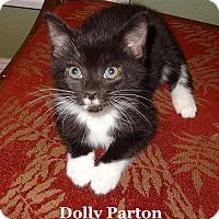 Adopt A Pet :: Dolly Parton - Bentonville, AR