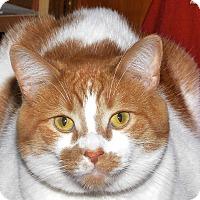 Adopt A Pet :: Simba - Medina, OH