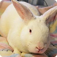 Adopt A Pet :: Casanova - Hillside, NJ