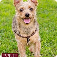 Adopt A Pet :: Bobbi - Marina del Rey, CA