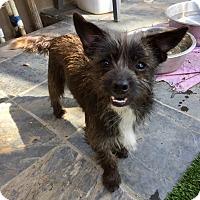 Adopt A Pet :: Fabio - Santa Ana, CA