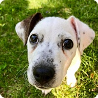 Adopt A Pet :: Arnold (RBF) - Spring Valley, NY