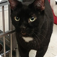 Adopt A Pet :: Ceaser - Walden, NY