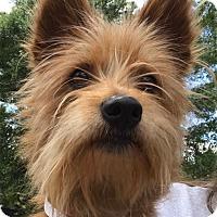 Adopt A Pet :: Angela - Orlando, FL