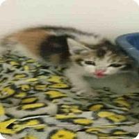 Adopt A Pet :: *MONIQUE - Bakersfield, CA
