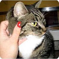 Adopt A Pet :: Fatty - Davis, CA