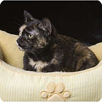 Adopt A Pet :: Jules (JF) - Little Falls, NJ