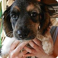 Adopt A Pet :: Toby - South Jersey, NJ