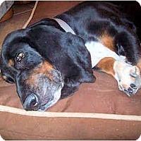 Adopt A Pet :: Herbie - Phoenix, AZ