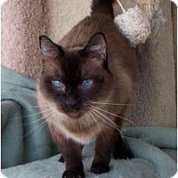 Adopt A Pet :: Sebastian - Palmdale, CA