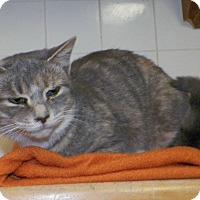 Adopt A Pet :: Pricilla - Dover, OH