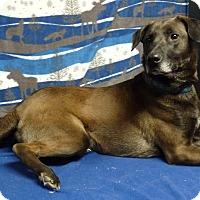 Adopt A Pet :: Clubber - Bedminster, NJ