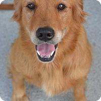 Adopt A Pet :: Birdie - Knoxville, TN