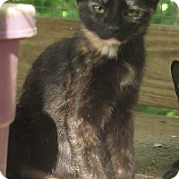 Adopt A Pet :: Lilly - Columbia, TN