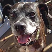 Adopt A Pet :: Two Socks - Rockaway, NJ