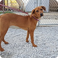 Adopt A Pet :: River - Frankfort, IL